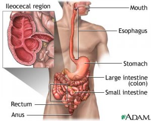 Chronic digestive diseases