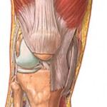 Knee Problems Pain And Disorder