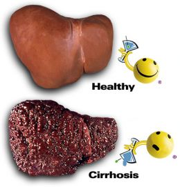Liver Function And Diseases