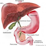 Pancreas Problems And Diseases