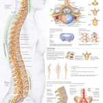 Spinal Disorders And Diseases