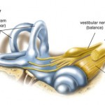 Inner Ear Diseases and Disorders