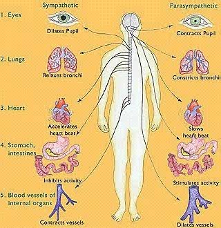 Nervous System Diseases