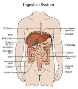 Leaky Gut Syndrome Symptoms