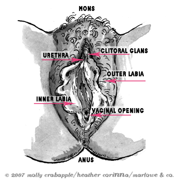 The Vagina, Clitoris, Uterus (Innies & Outies)